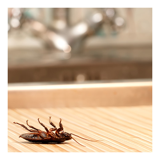 Prevent Bugs And Pests In Your Apartment